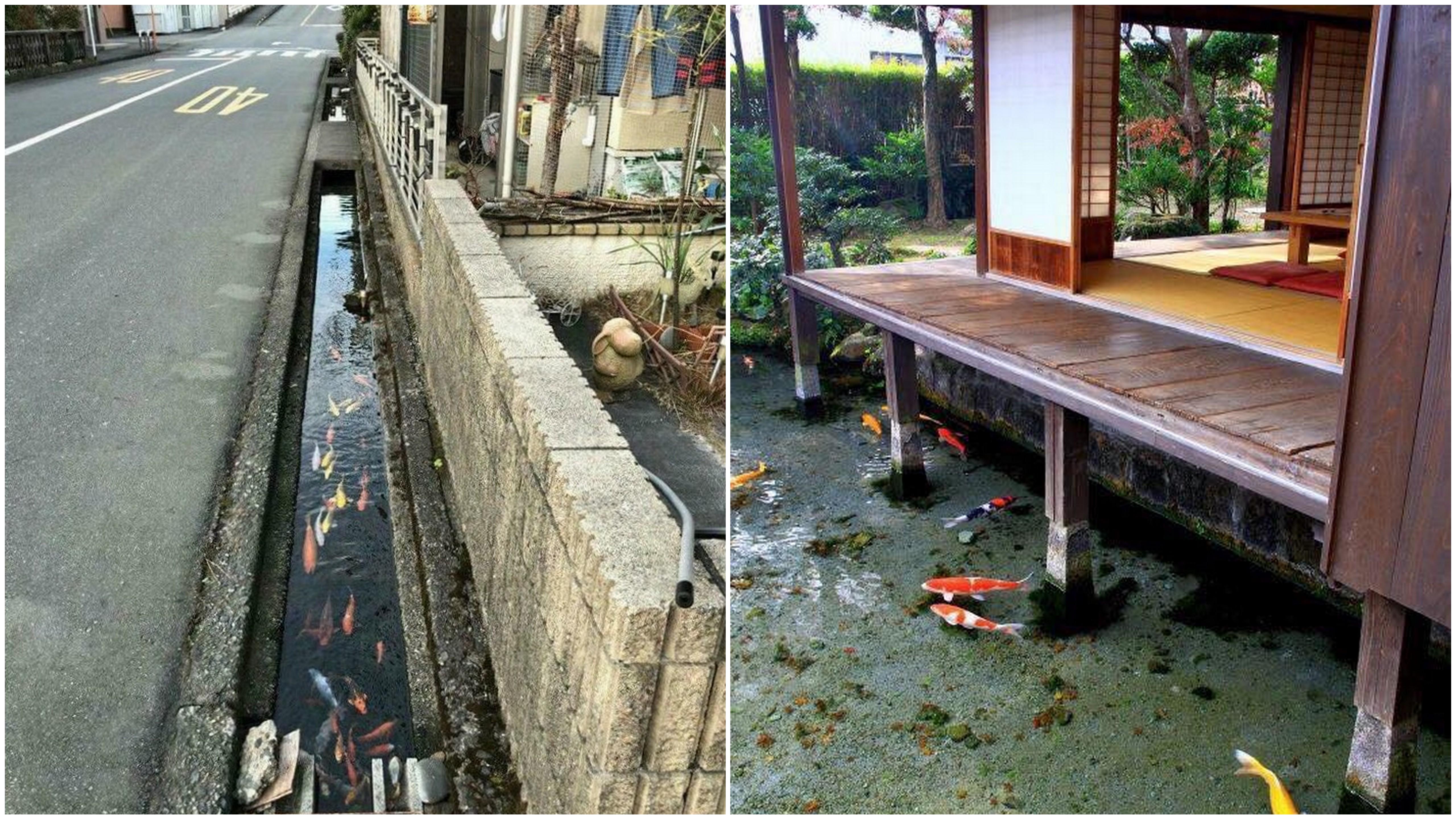Quanto è pulito il Giappone? 10 foto che lo dimostrano