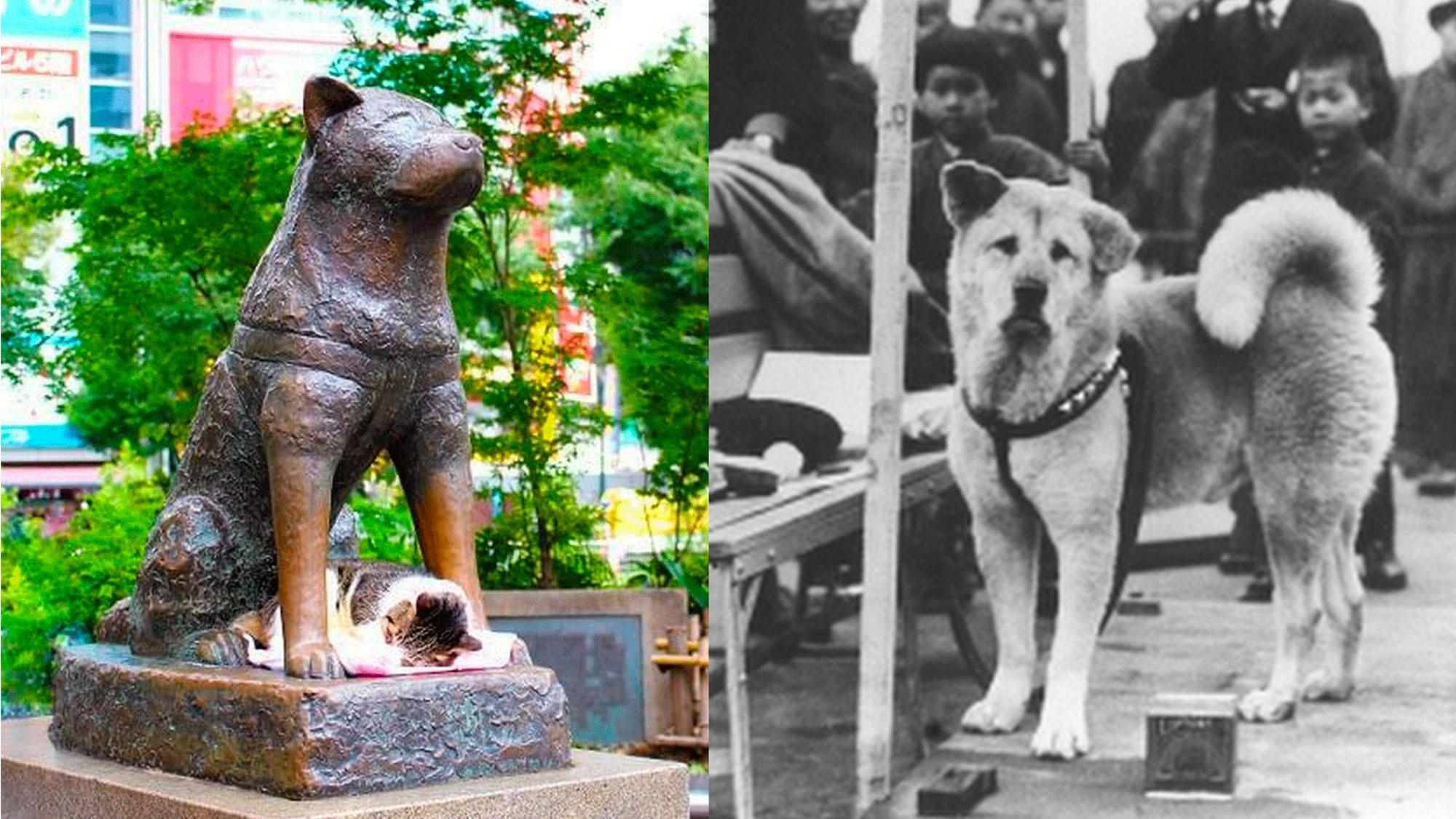 Incontrare Hachiko: 5 luoghi legati al più famoso cane giapponese
