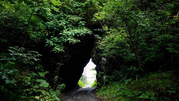 Totoro esiste! Scoperto in una foresta giapponese il personaggio Ghibli